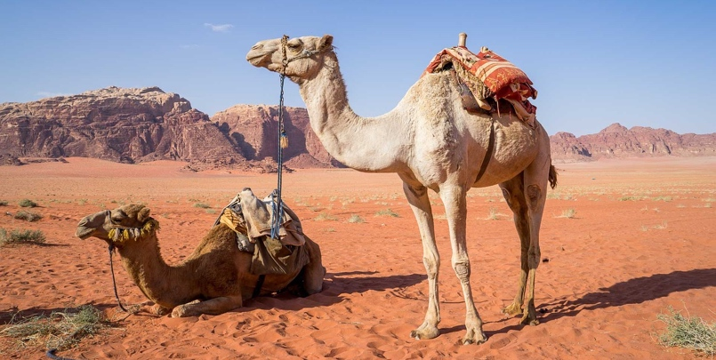 Learn everything about Jordan before you travel there