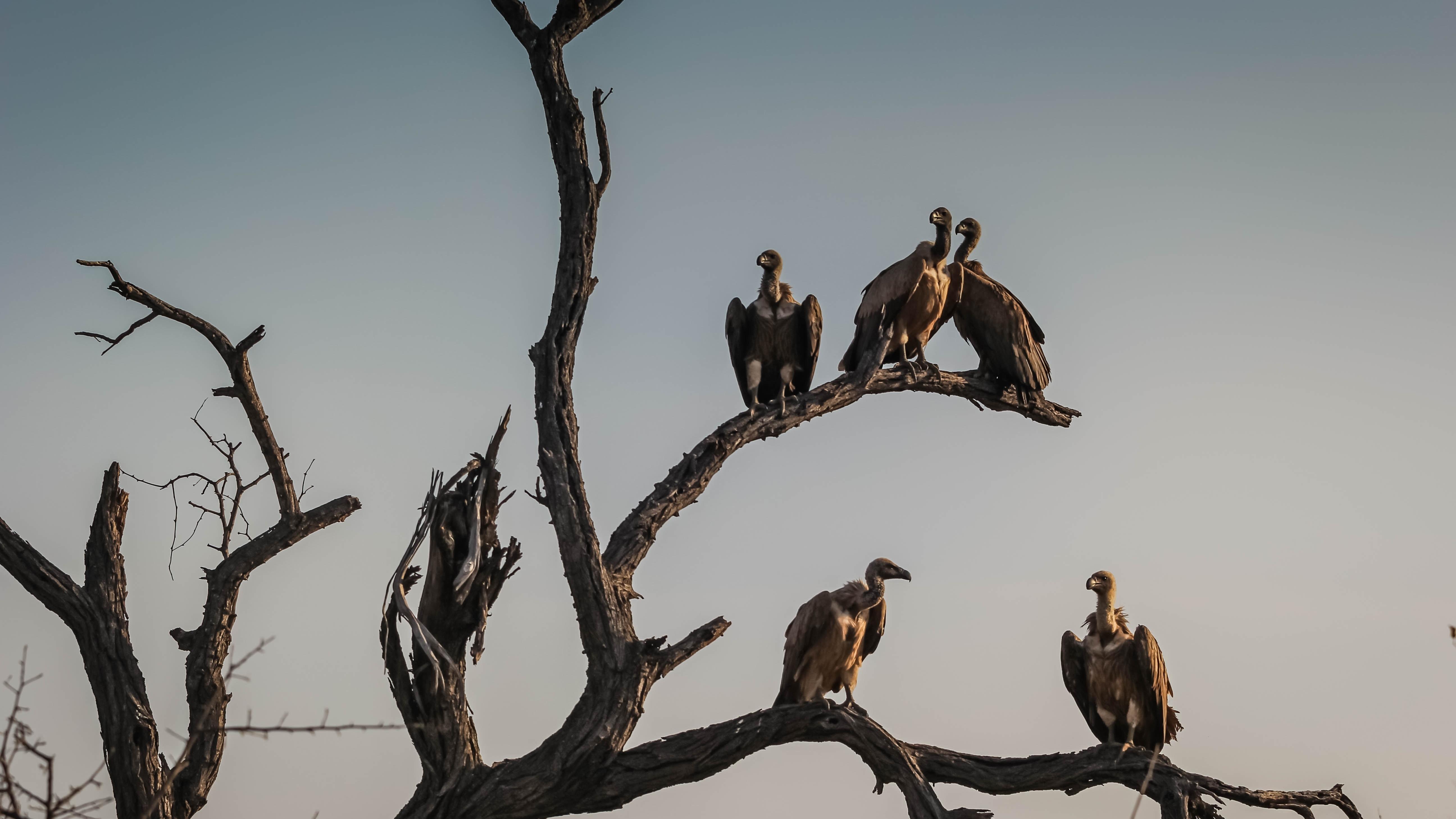 Shaurmari WildLife Reserve