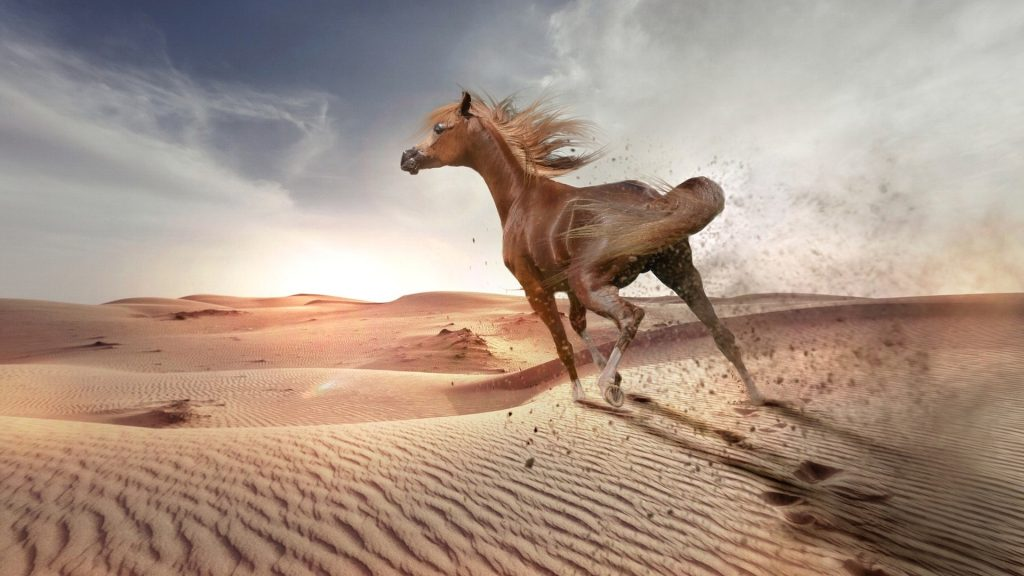 horeseback riding in jordan